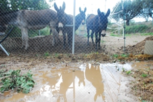 """What are you going to do about this then?"" Donkeys hate water.  The field is now a lake."