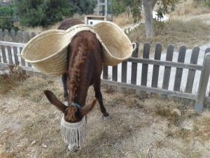 Donkey weeding 006