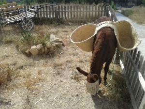 Donkey weeding 007