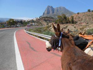 Donkey weeding 014
