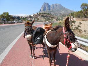 Donkey weeding 019