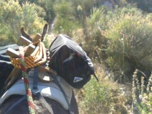 Donkeys June 2013 006