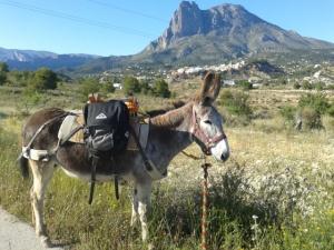 Donkeys June 2013 007