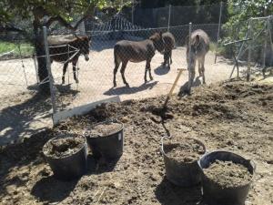 Donkeys June 2013 017