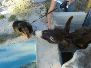 Donkeys June 2013 018
