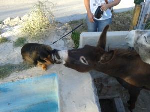 Donkeys June 2013 019