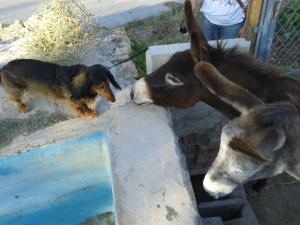 Donkeys June 2013 023