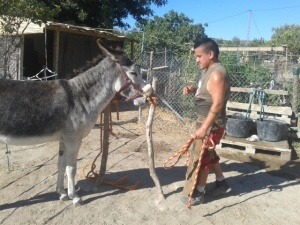 Cristian the farrier (not taking any nonsense from Matilde)