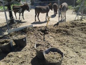 Donkeys June 2013 016