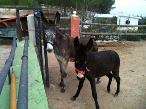 Matilde and Rubí looking at their new owner and sizing him up...