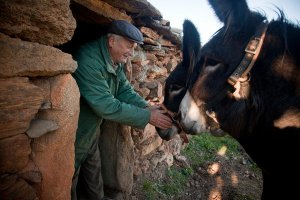 "Without those subsidies, ""it would make no economic sense to keep my donkeys, however attached I am to them,"" said Gonçalo Domingues, a 70-year-old farmer who has two Mirandas."