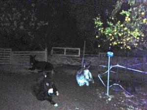 Donkeys at midnight: Aitana Matilde and Morris
