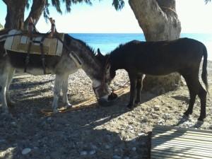 Matilde and Rubí on the beach