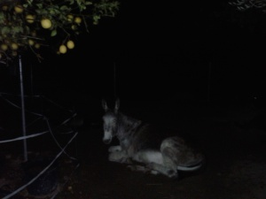 Matilde under the lemon tree