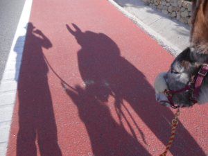 Walking home in the shadow of donkeys. It doesn't get any better than this.