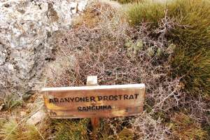 "What a lovely name for a spiky plant. ""Ananyoner Prostrat Sanguina"" - example of Generalitat Valenciana botanical signposting signposting"