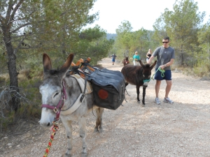 Donkey walking on Easter Saturday, not made much easier by Matilde jumping on Rubí...