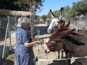 Rosemary with the donkeys