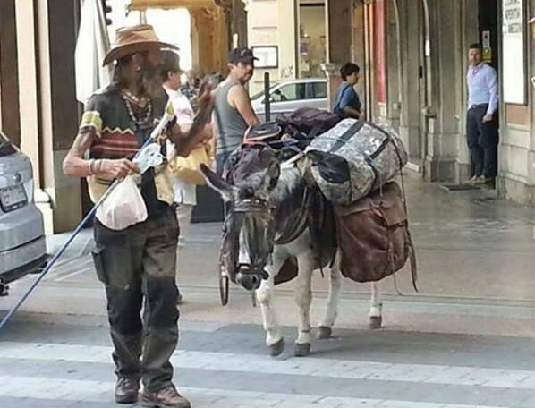 Stolen donkey Pinpon, in La Spezia. If you see it please notify  the police IMMEDIATELY!