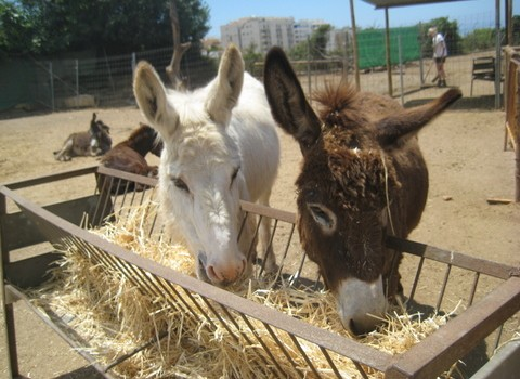 Donkeys at Nerja sanctuary