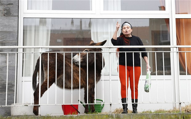 Rood norty donkey on a balcony