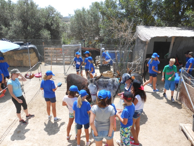 Feeding apples and carrots to the donkeys