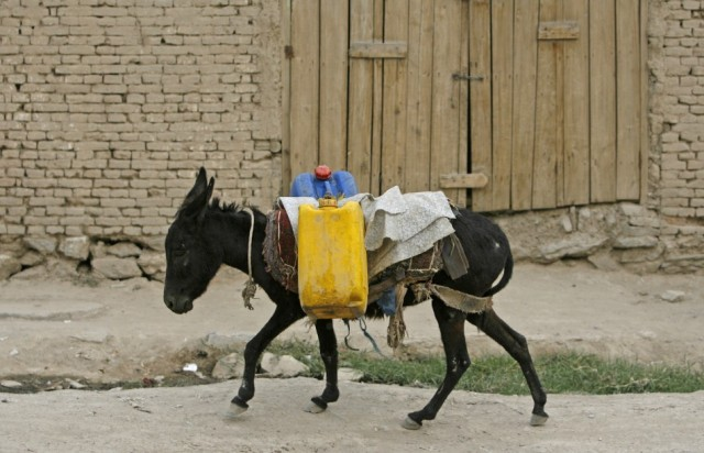 donkey water carrier