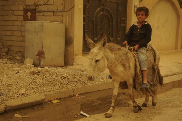 iraqi boy on donkey
