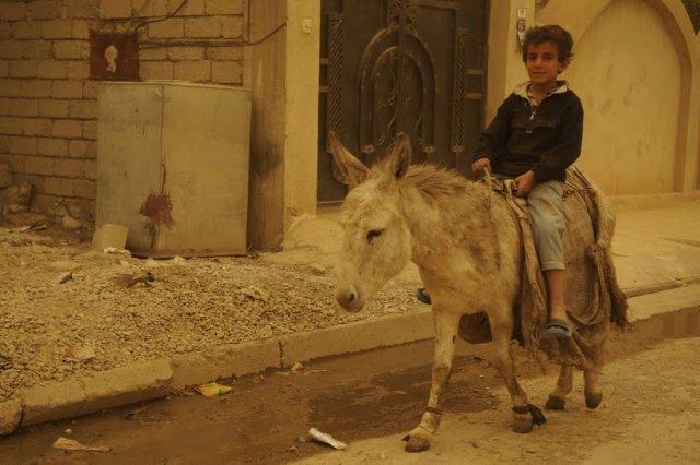 iraqi boy on donkey