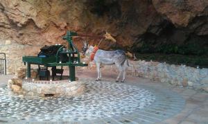 Mill donkey