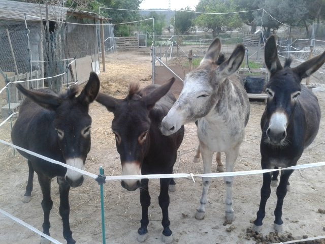 Morris, Matilde and Aitana lining up to greet me on arrival from work. Rubí in Eeyore mode.