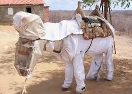 ebola donkey