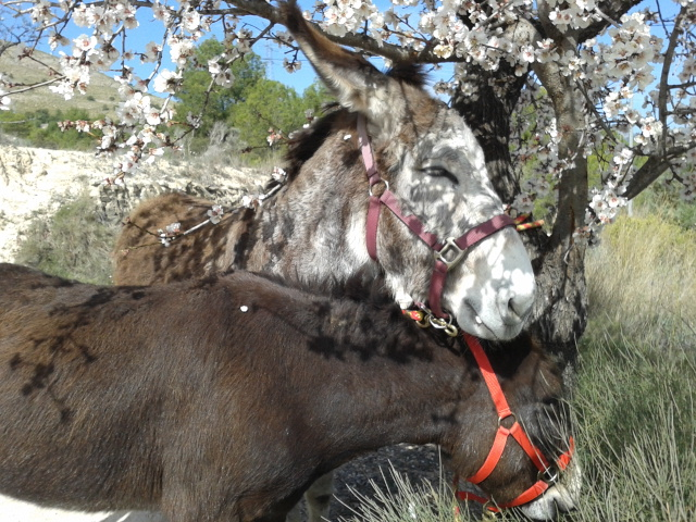 Matilde and Rubí in the almond blossom