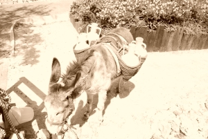 Matilde tries on the traditional donkey gear at the Museo Finestrat (filmed in sepia for atsmosphere).
