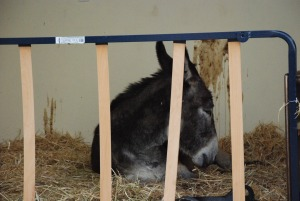 Matilde has dark grey thoughts while waiting for the next feed.