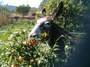 Greyly tasting the forbidden fruit
