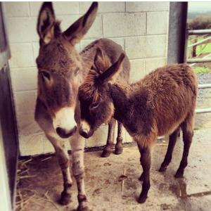 Happy Monday! For more info check out http://www.thedonkeysanctuary.ie