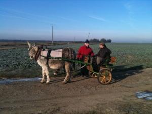 Donkey cart to Saint Savin, Boxing Day 2010