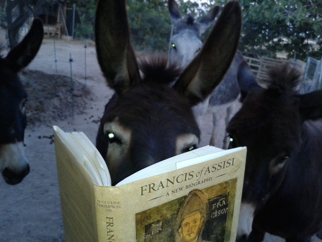 Morris reading Augustine Thompson's biography of St Francis